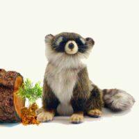 Hansa Young Raccoon