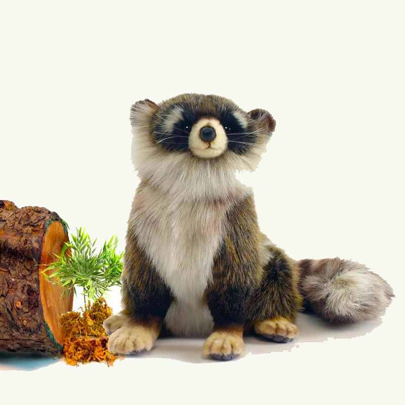 Hansa Young Raccoon