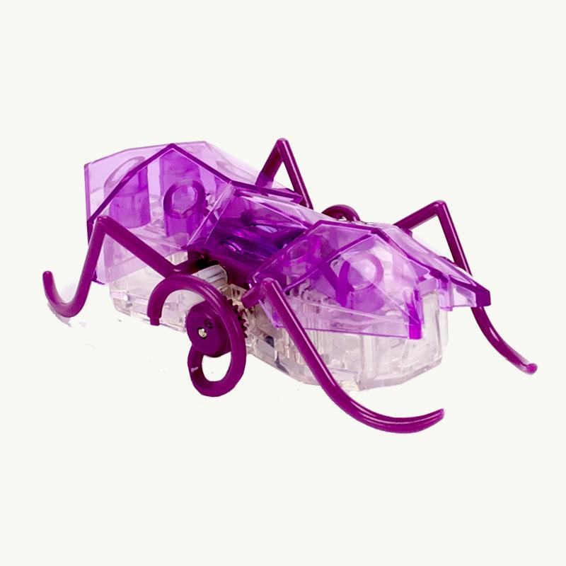 Micro Purple Ant